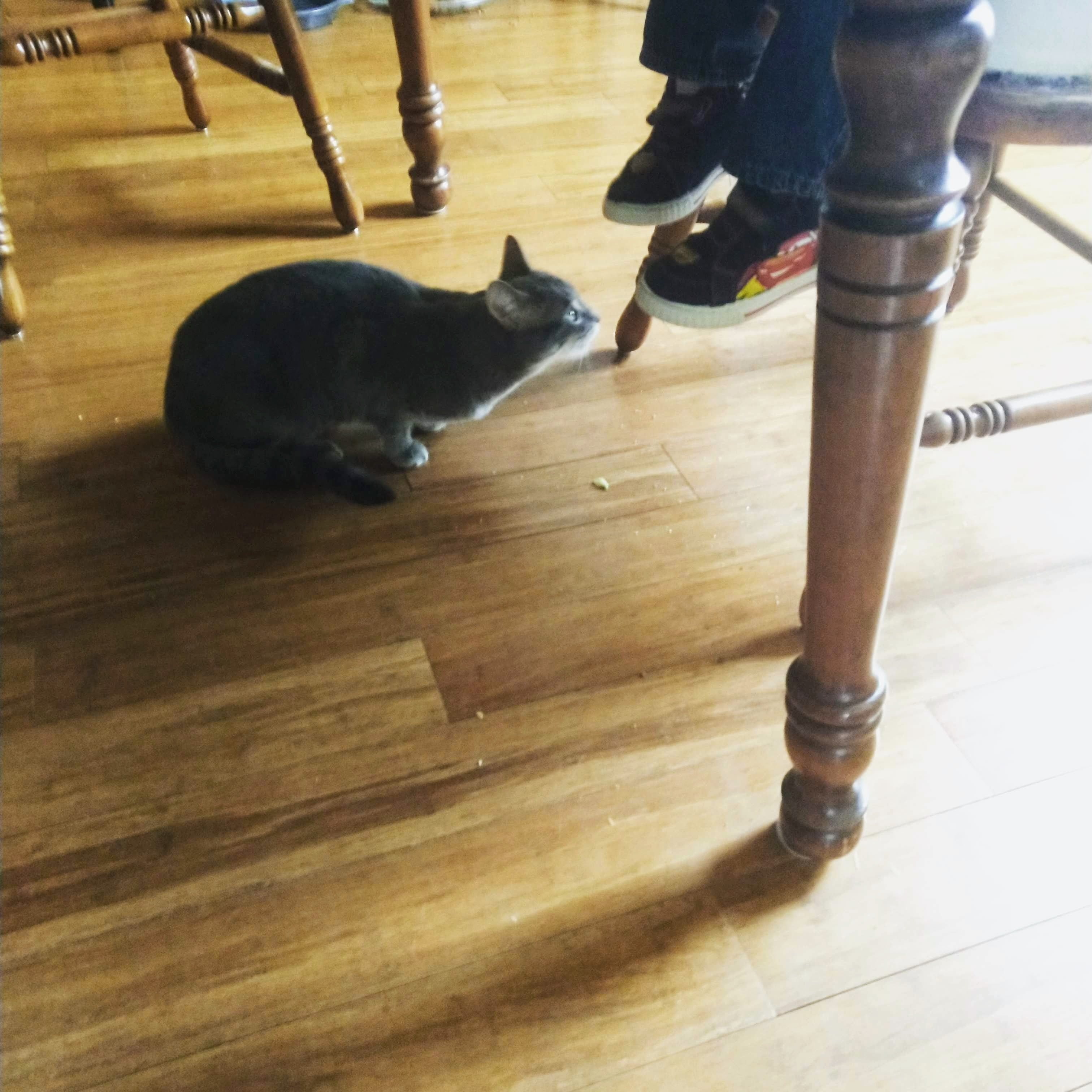 small cat under table waiting for child to drop food