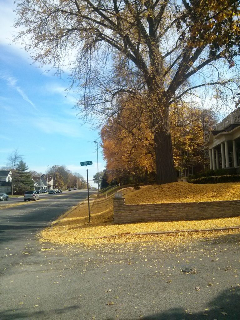 house on corner with ginkgo in yard, leaves everywhere