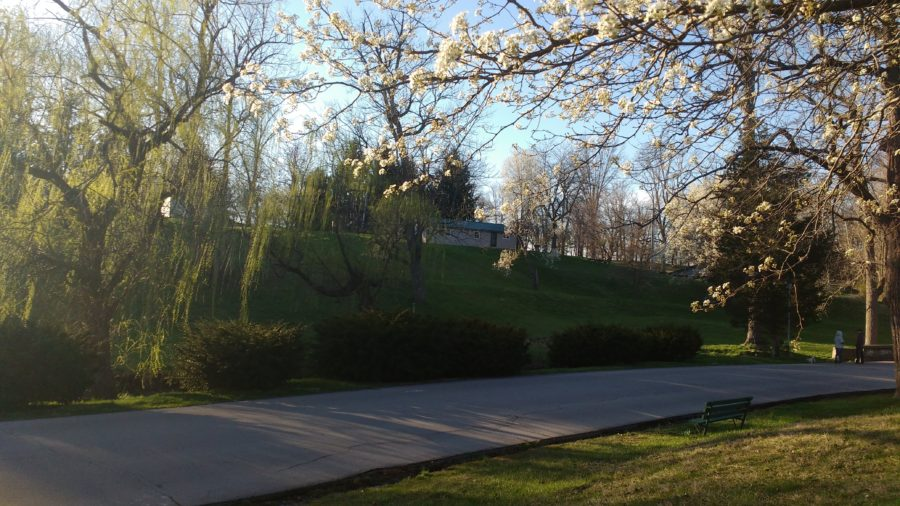 park with flowering trees