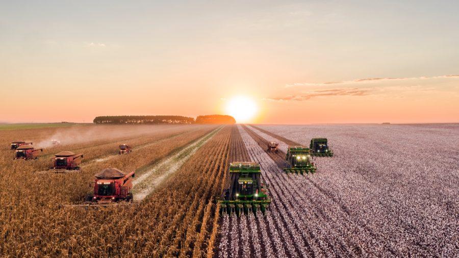 combines and farm trucks harvesting a wheat field