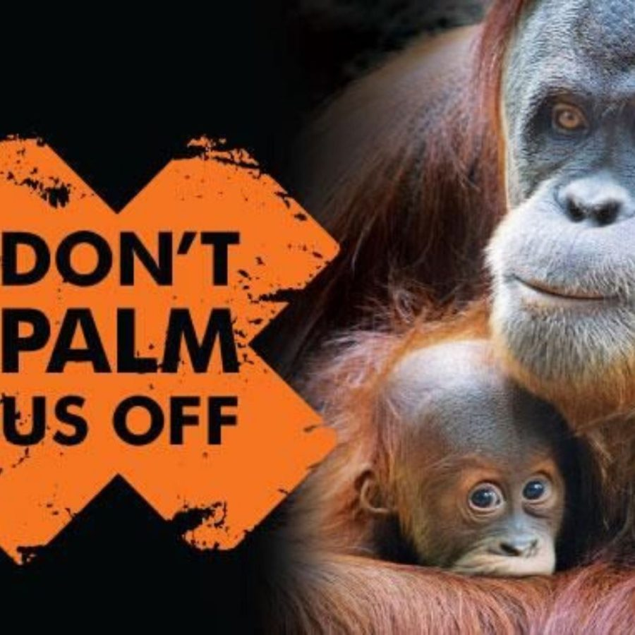 meme dangers of palm oil farming on orangutan population
