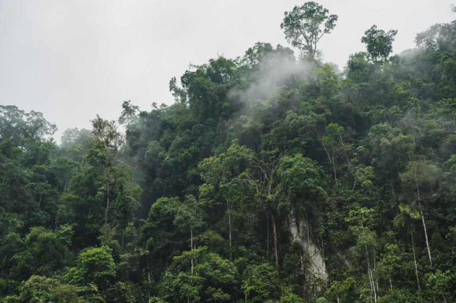 this rainforest destroyed for palm oil